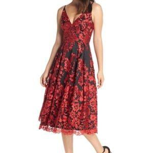 Eliza J Lace Evening Dress ❣️
